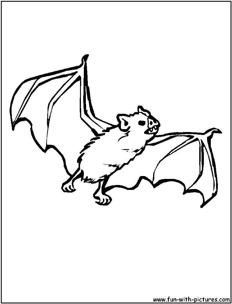 800x1050 Nocturnal Animals Printable Coloring Pages More Animals Coloring