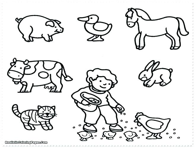 658x500 Real Animal Coloring Pages Stuffed Animal Coloring Pages Nocturnal