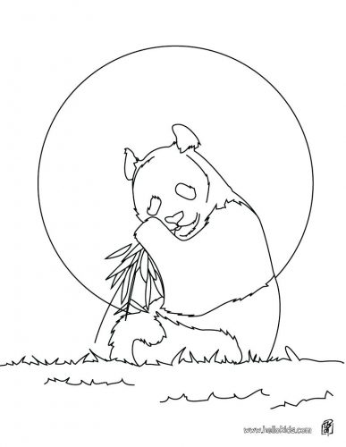 387x500 Coloring Pages Animal Color Pages Nocturnal Animals Coloring