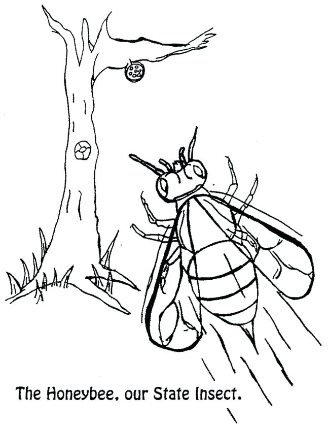 647x843 Nc Coloring Pages State Symbols