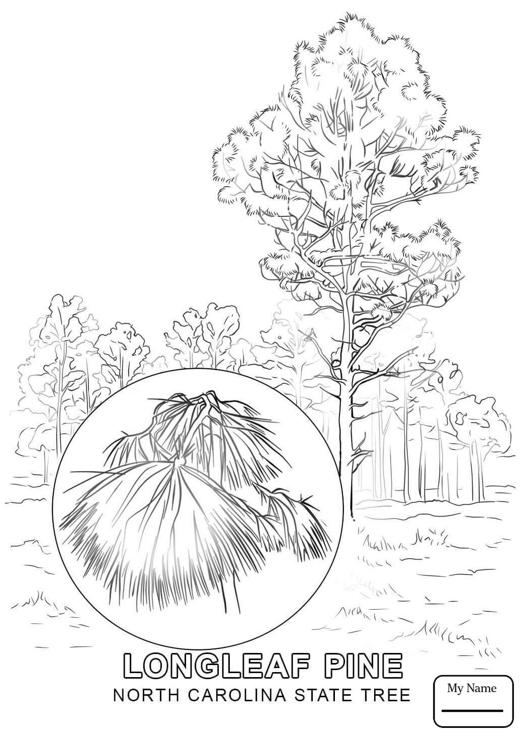1040x1469 North Carolina State Flower Coloring Page