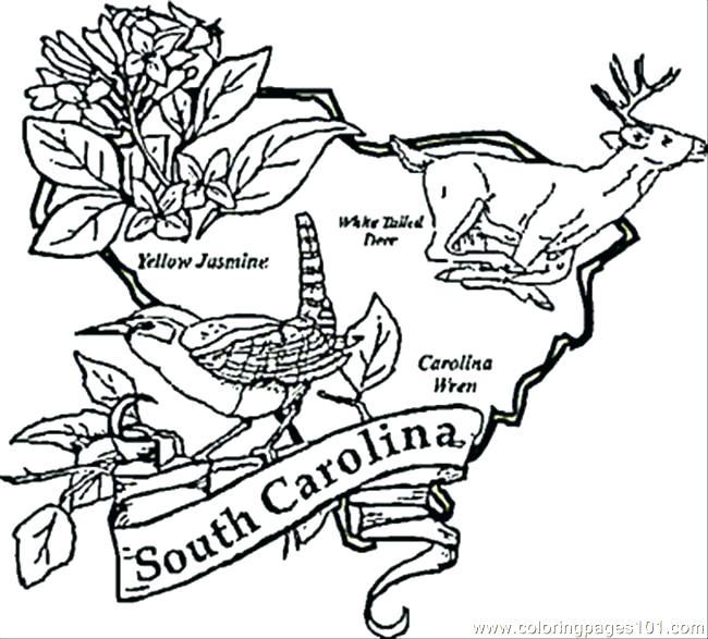 650x587 South Carolina Coloring Pages S S South Carolina Symbols Coloring