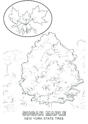 340x480 New State Flower Coloring Page New State Coloring New State Flag