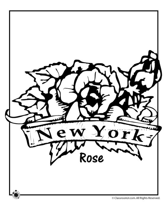 564x729 New York State Flower Coloring Page, State Flowers Coloring