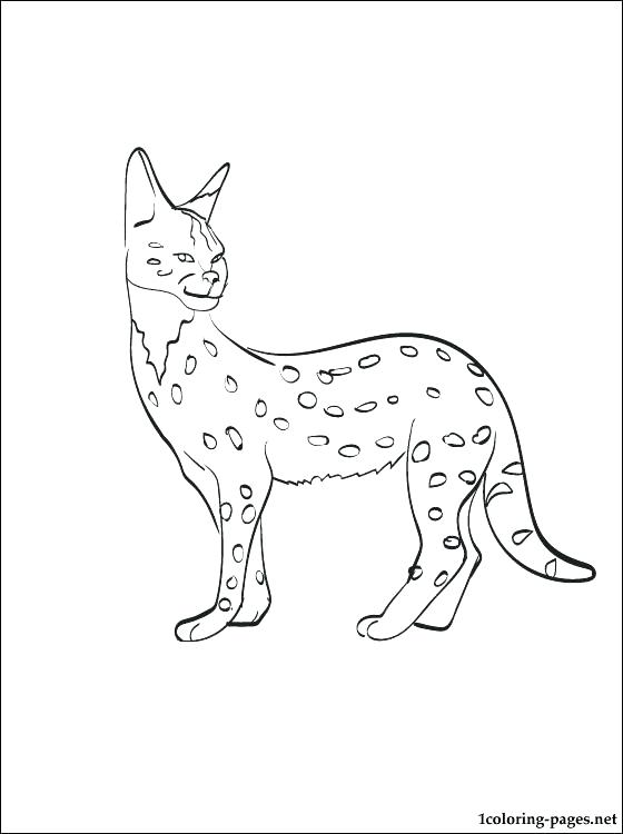 nyan cat coloring page at getdrawings free for