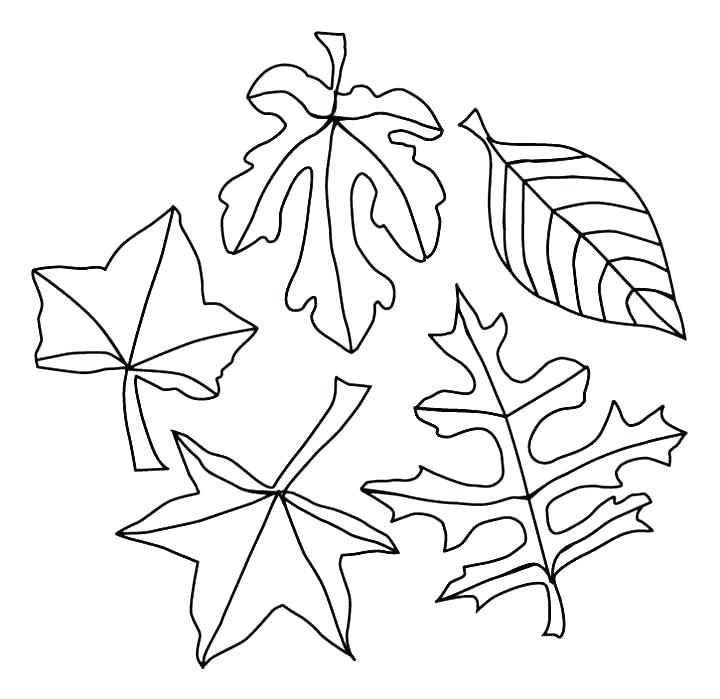 720x699 Fall Leaf Coloring Pages Oak Leaf Coloring Page Big Leaves