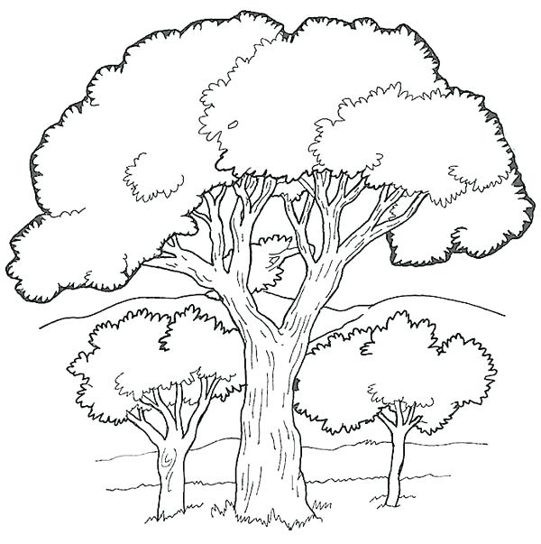 600x603 Luxury Forest Coloring Pages Printable For Oak Tree In The Forest