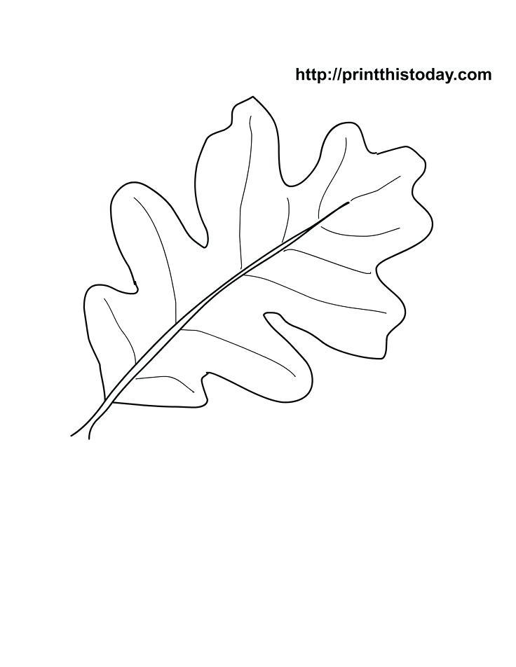 736x952 Oak Leaf Coloring Page Oak Leaf Stencil Printable Oak Leaf