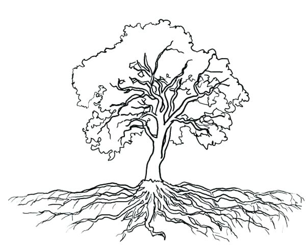 600x480 Oak Tree Coloring Page Coloring Tree Oak Tree Massive Roots