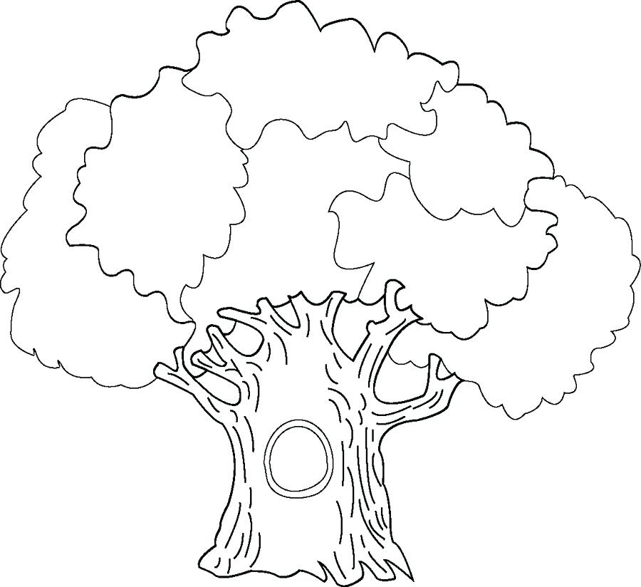 900x824 Oak Tree Coloring Pages Coloring Page Of A Tree White Oak Tree
