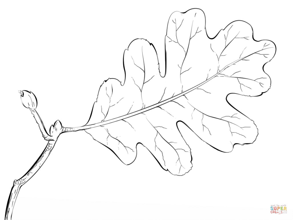 1026x772 Oak Tree Leaf Coloring Page Free Printable Pages Within Acpra