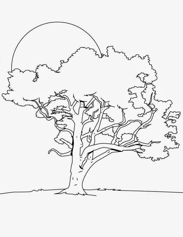600x776 Oak Tree In The Night Coloring Page Color Luna