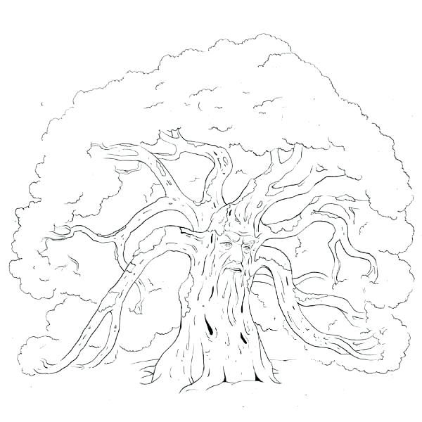 600x600 Red Oak Tree Coloring Page Family Pages Printable Go Digital