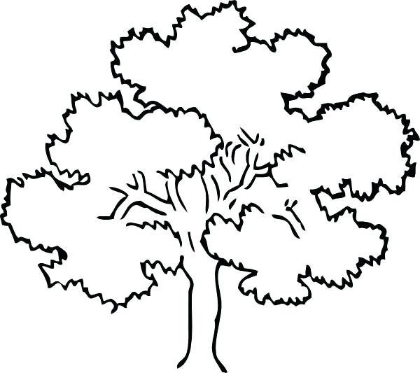 600x533 Tree Coloring Pages Tree Color Page Oak Tree Coloring Page