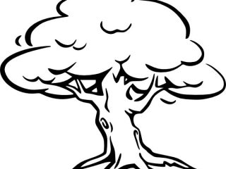 320x240 Tree Pictures For Colouring Oak Tree Coloring Page For Kids Color