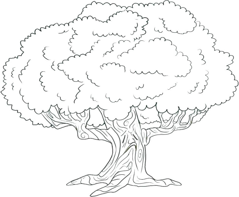970x798 Oak Tree Coloring Page