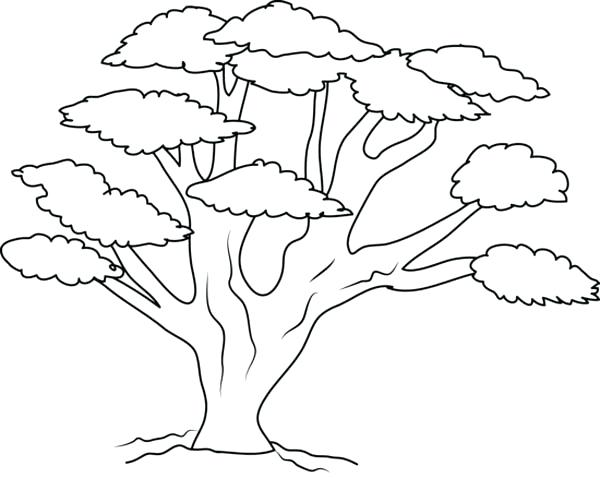 600x478 Coloring Pages Of Trees Oak Tree With So Many Branch Coloring Page