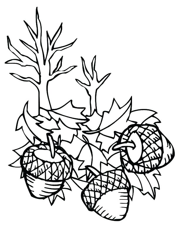 600x775 Oak Leaf Coloring Page Acorn Falling Down Coloring Pages Oak Leaf