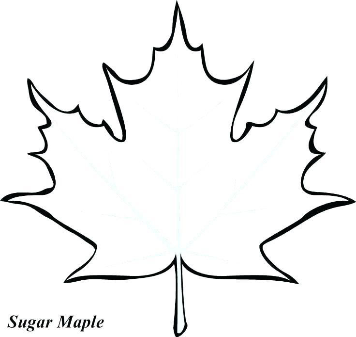 736x695 Oak Leaf Coloring Page Oak Leaf Coloring Page Leaves Printable