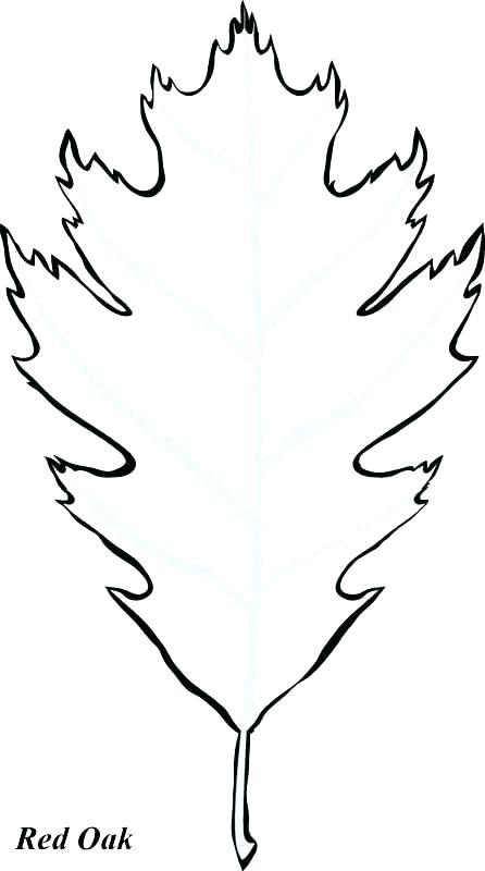 Oak Leaf Coloring Page At Getdrawings Com