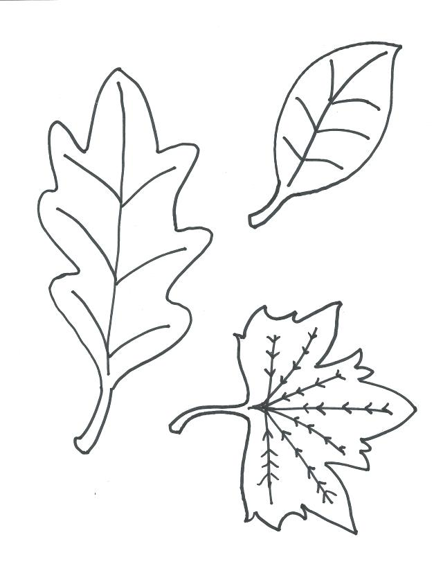 640x837 Printable Leaves Coloring Viewing Gallery For Leaf Coloring Page
