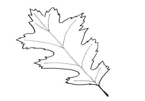 476x333 Unusual Oak Leaf Coloring Pages Contemporary Resume Ideas Coloring