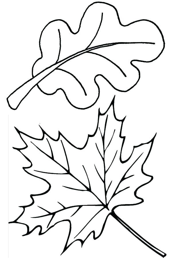 600x900 Coloring Leaves Fall Leaves Coloring Pages Maple And Oak Fall Leaf
