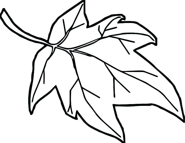 728x566 Coloring Page Leaf Oak Leaf Coloring Page Leaves Coloring Pages