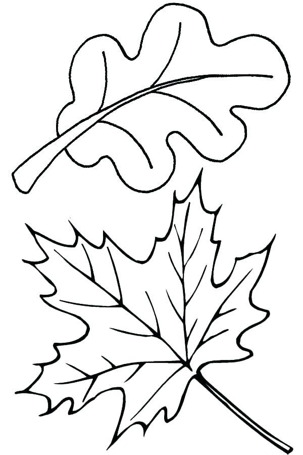 600x900 Leaf Stencils Printable Fall Leaves Template Maple Leaf Template