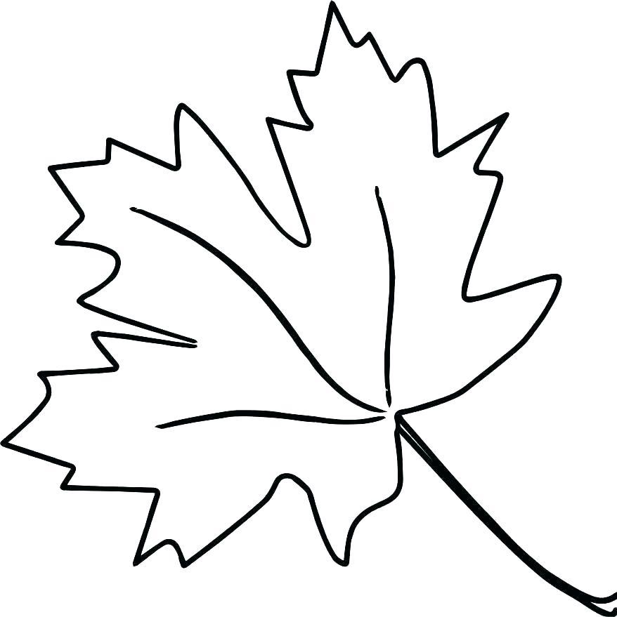 878x879 Oak Leaf Coloring Page Download Large Image Oak Leaves Coloring