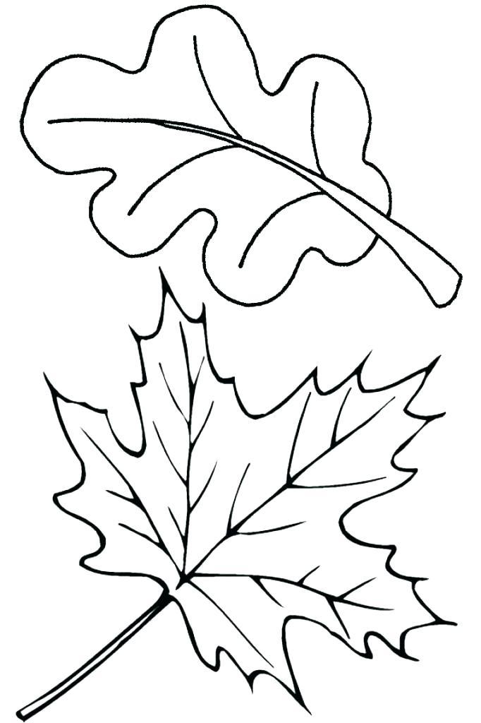 682x1024 Oak Leaf Coloring Page Oak Leaf Coloring Page Oak Leaf Coloring