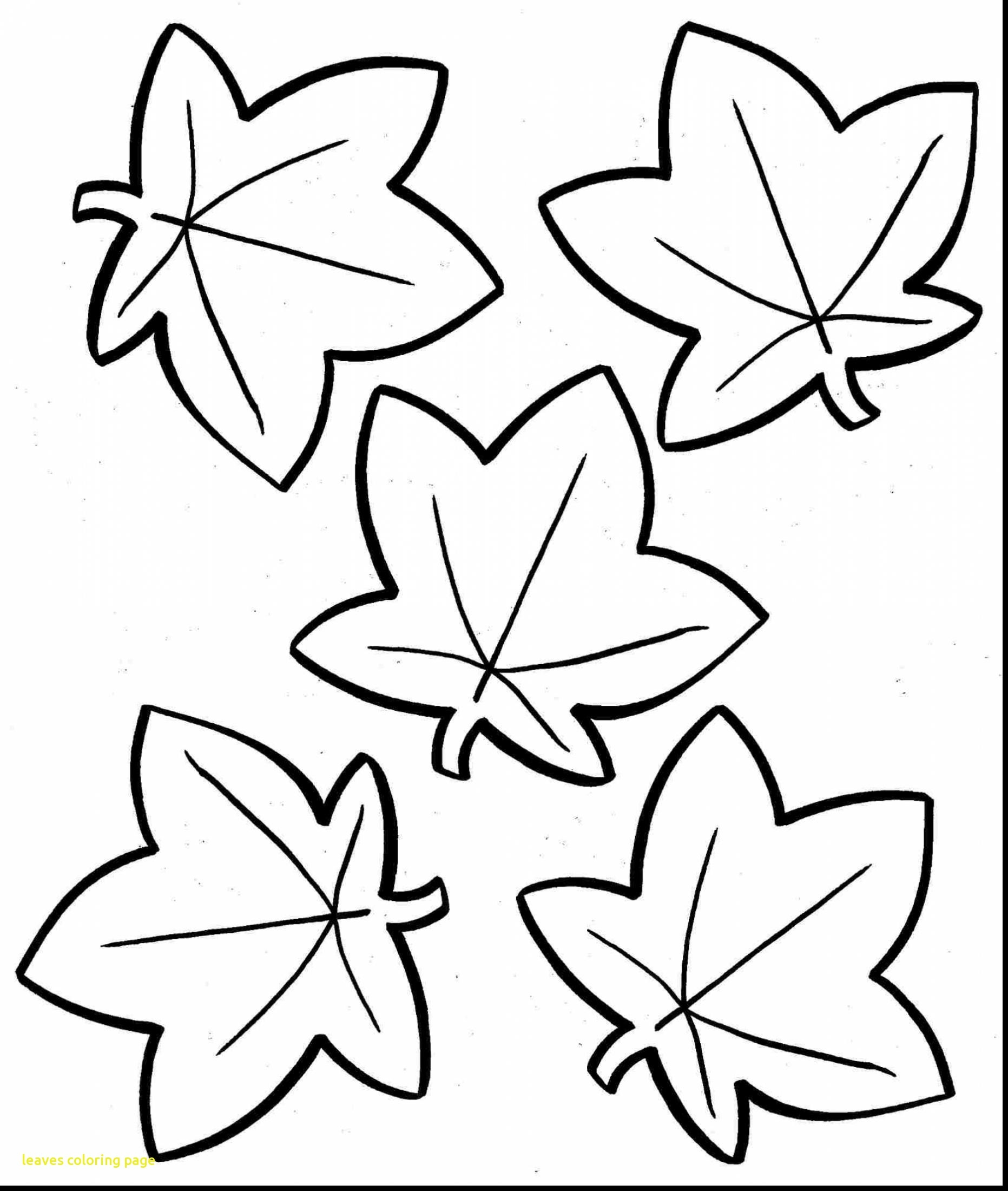 1863x2200 Printable Coloring Pages For Fall Trees New Eastern Black Oak Leaf