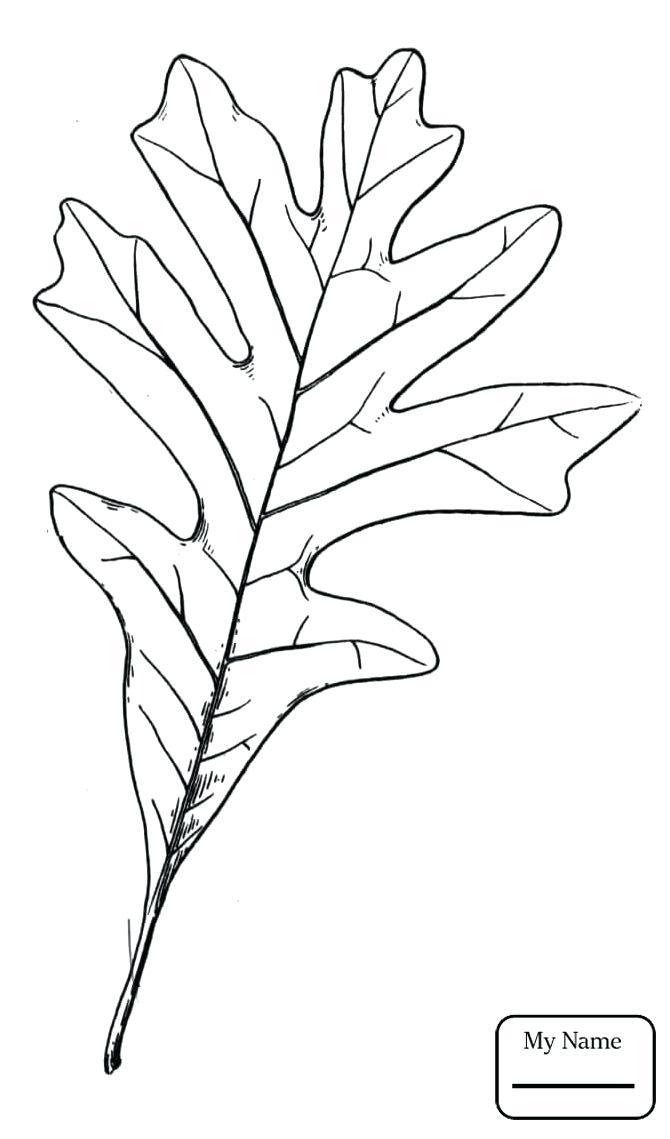 670x1139 Oak Tree Coloring Page Little Leaf Of Oak Trees Leaves Oaks