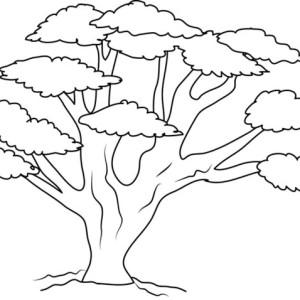 300x300 Giant Oak Tree Coloring Page Color Luna