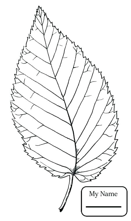 452x765 Oak Leaf Coloring Page Maple Tree Coloring Page Oak Leaf Coloring