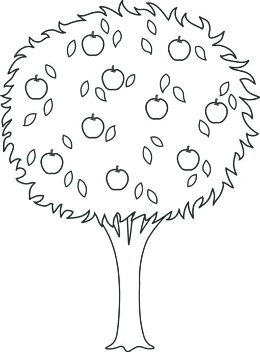510x691 Apple Tree Coloring Pages Oak Tree Coloring Page Tree Leaves