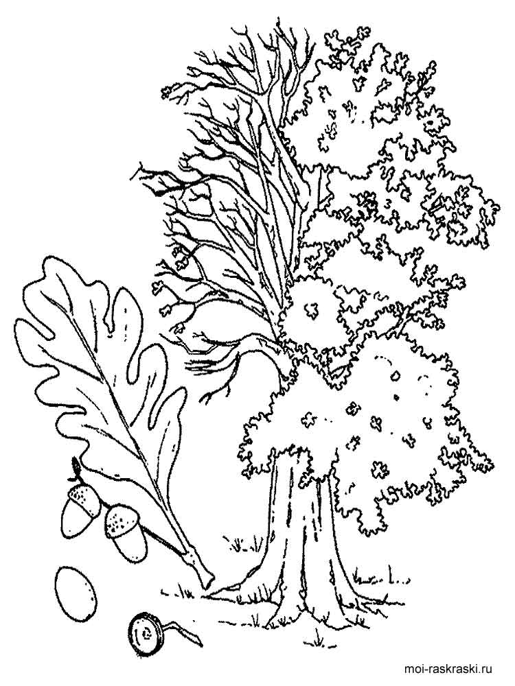 750x1000 Oak Tree Coloring Pages For Kids Free Printable Oak Tree Coloring