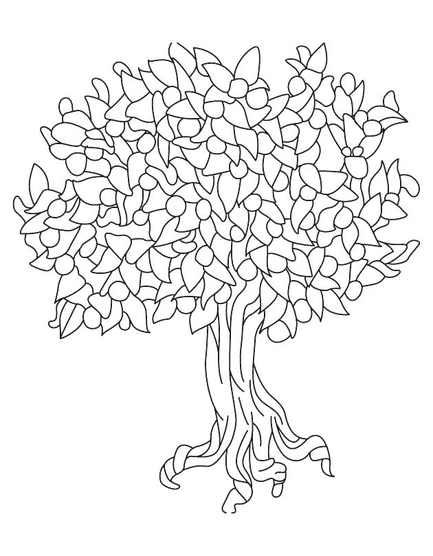 630x810 Bare Tree Coloring Page Oak Tree Outline Bare Tree Coloring Page