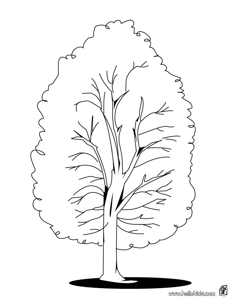 820x1060 Oak Tree Coloring Pages