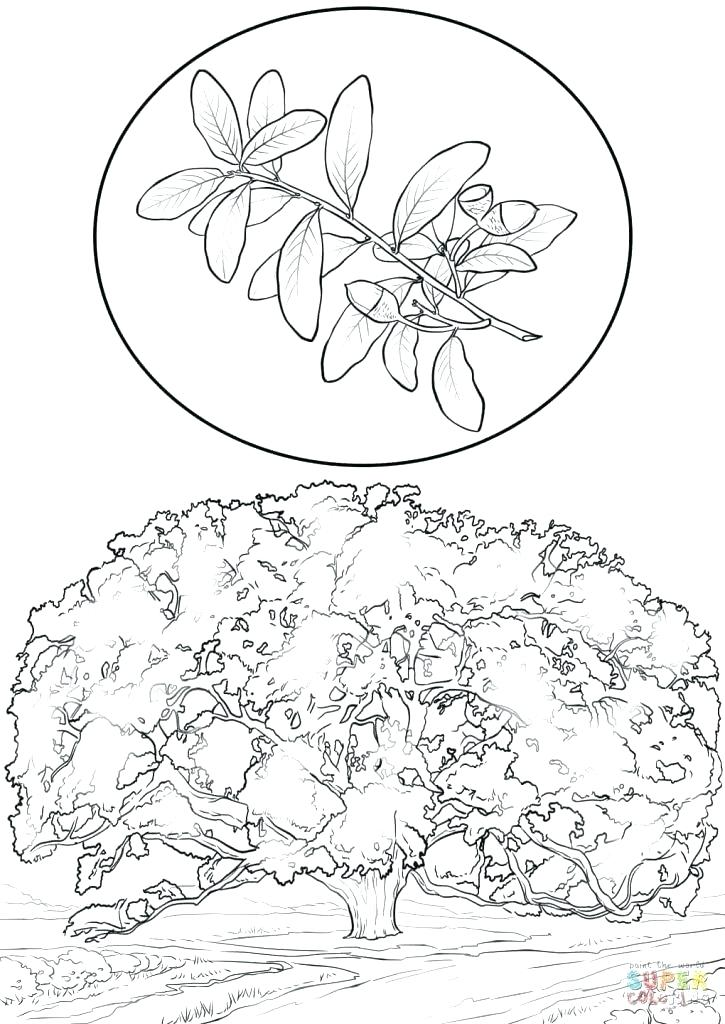725x1024 Printable Tree Coloring Pages