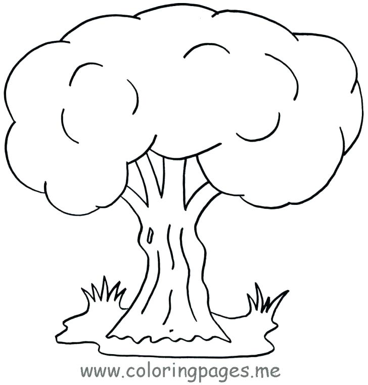 728x761 Oak Tree Coloring Pages
