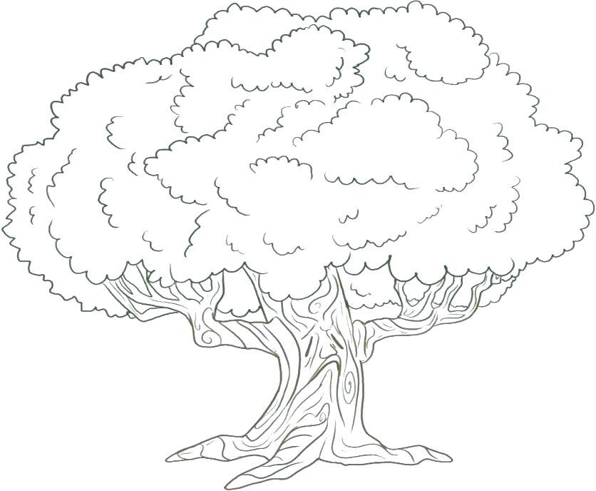 836x688 Oak Tree Coloring Pages Teleks Site