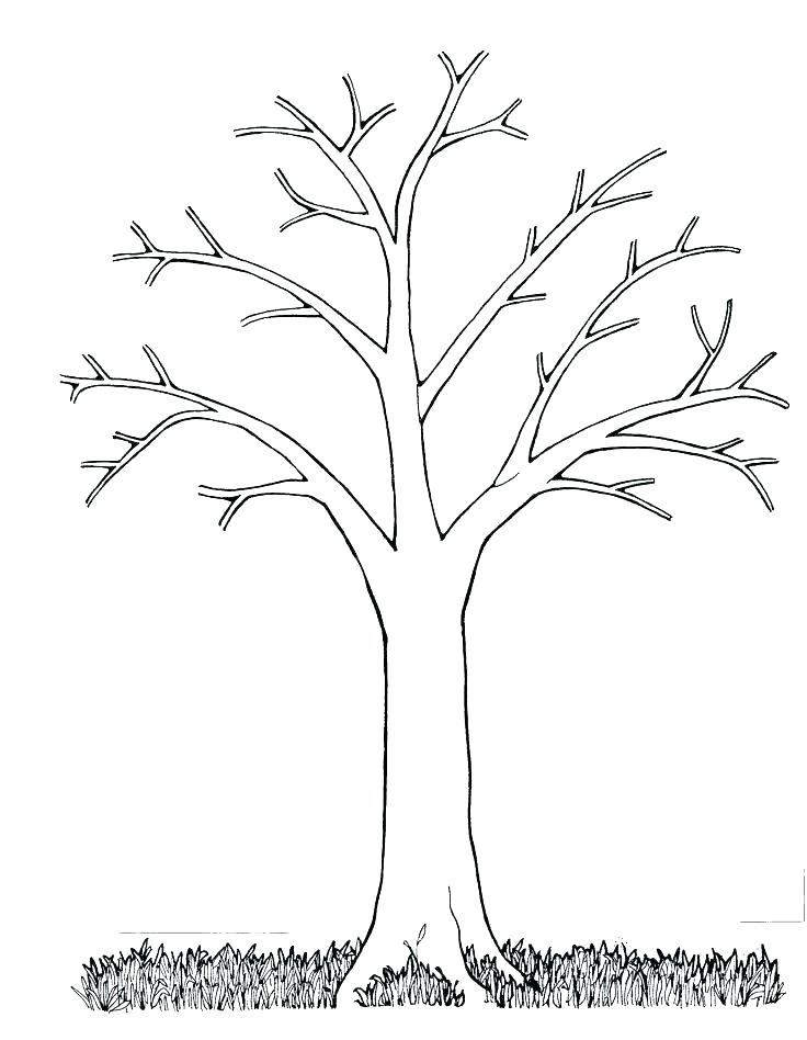 736x948 Coloring Page Tree Oak Tree Coloring Page Tree Coloring Pages Tree