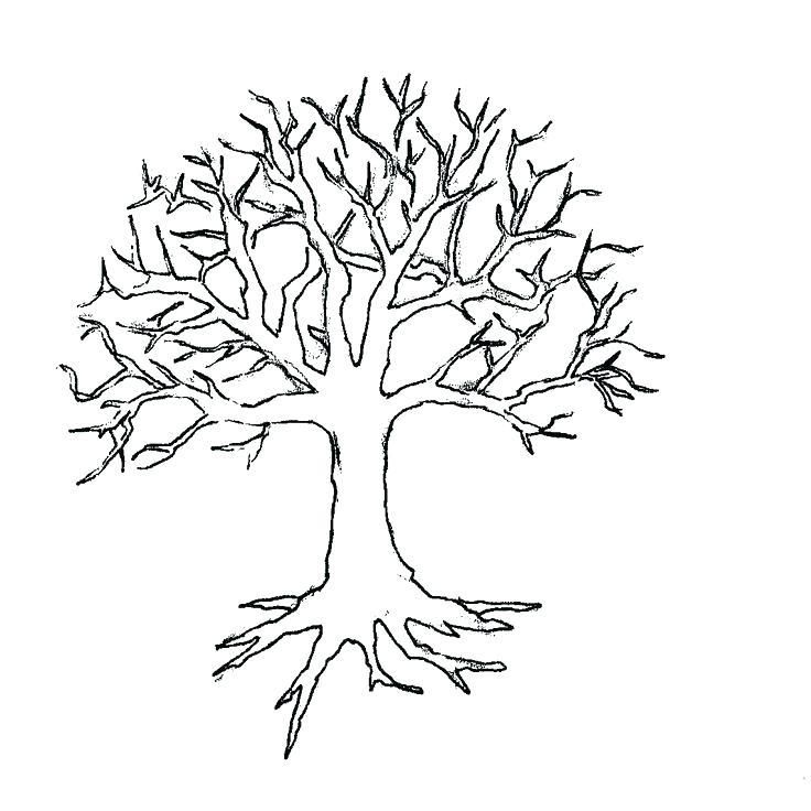 736x736 Coloring Pages Of Trees Oak Tree With So Many Branch Coloring Page