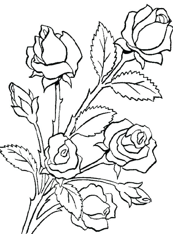 600x812 Coloring Pages Of Trees Plants And Flowers Colouring Pages Trees