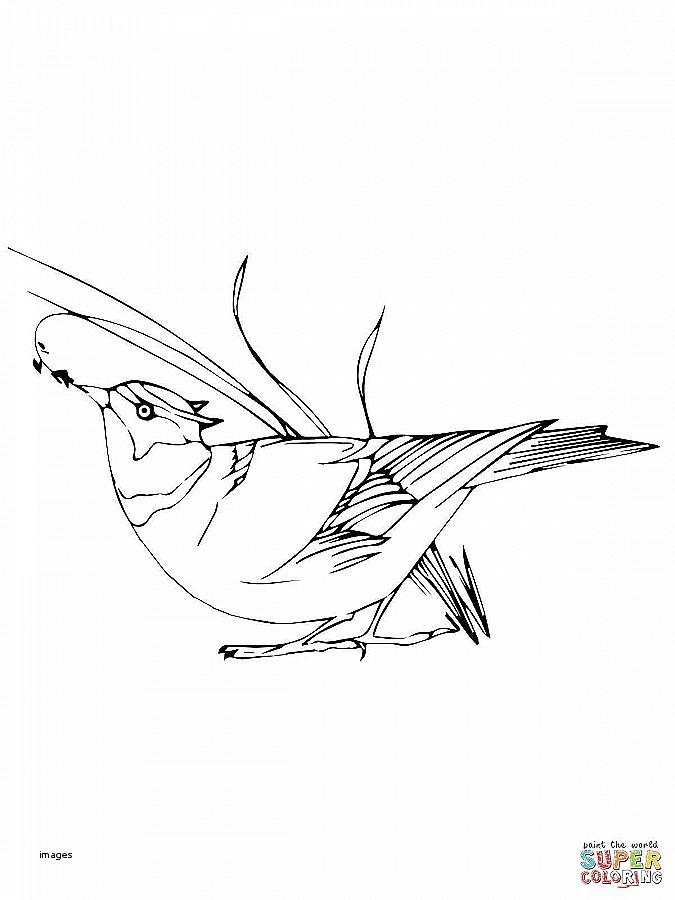 675x900 House Plan Best Of Bird House Plans For Wrens Bird House Plans