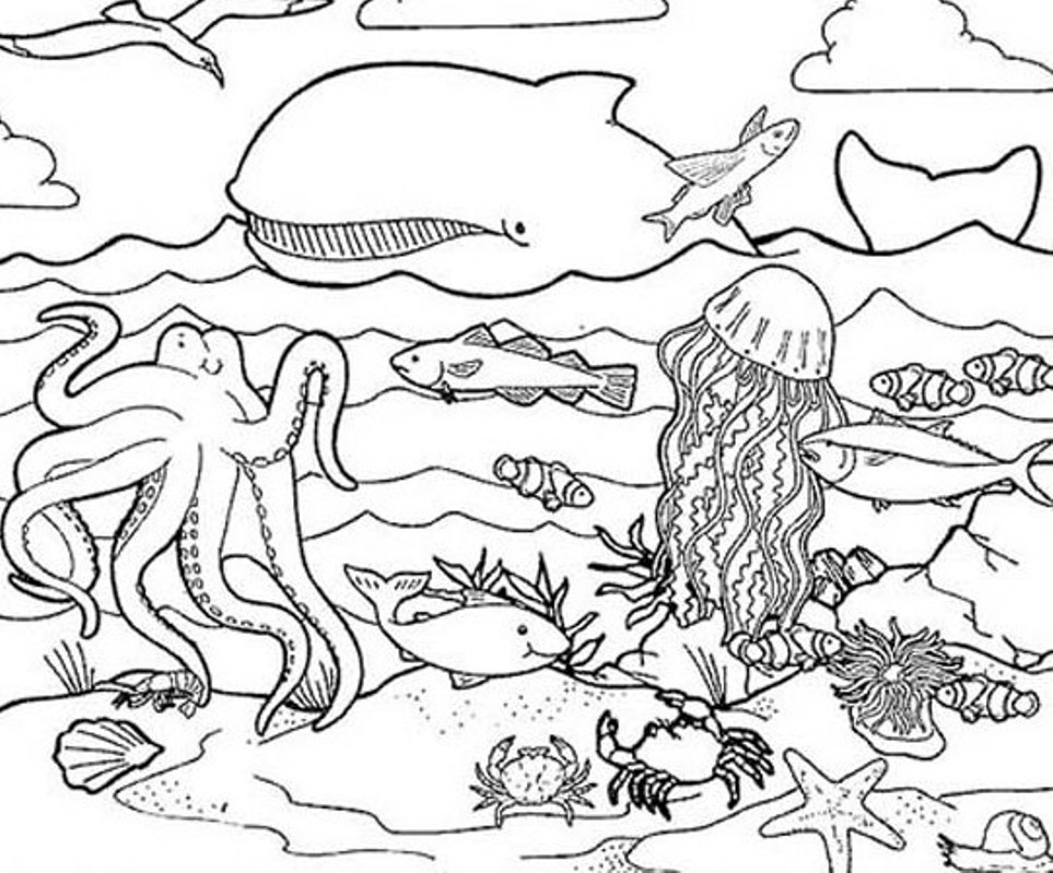 963x799 Underwater Animals Coloring Pages