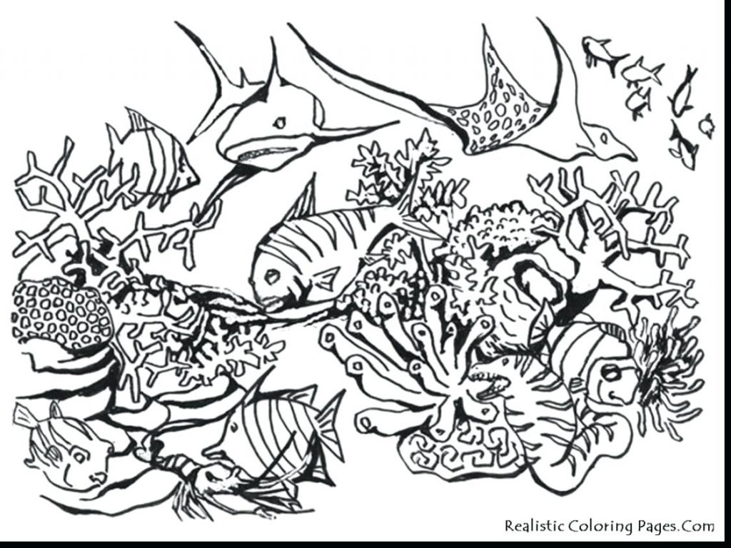 1024x768 Coloring Pages Sea Animal Coloring Pages Beautiful Realistic