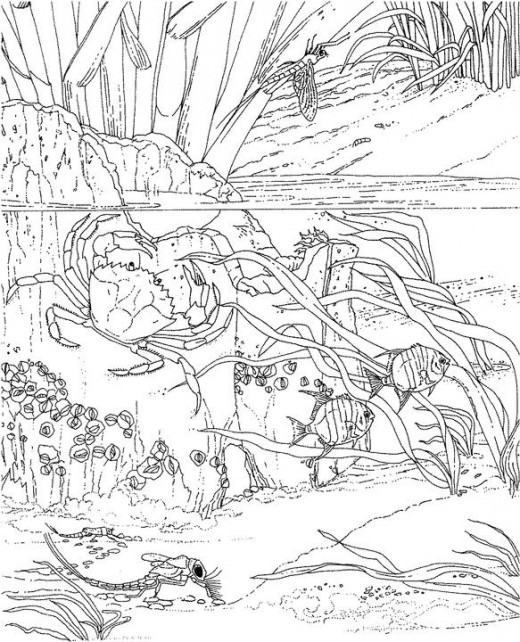 520x642 Adult Ocean Coloring Pages Printable Coloring Page For Kids Kids
