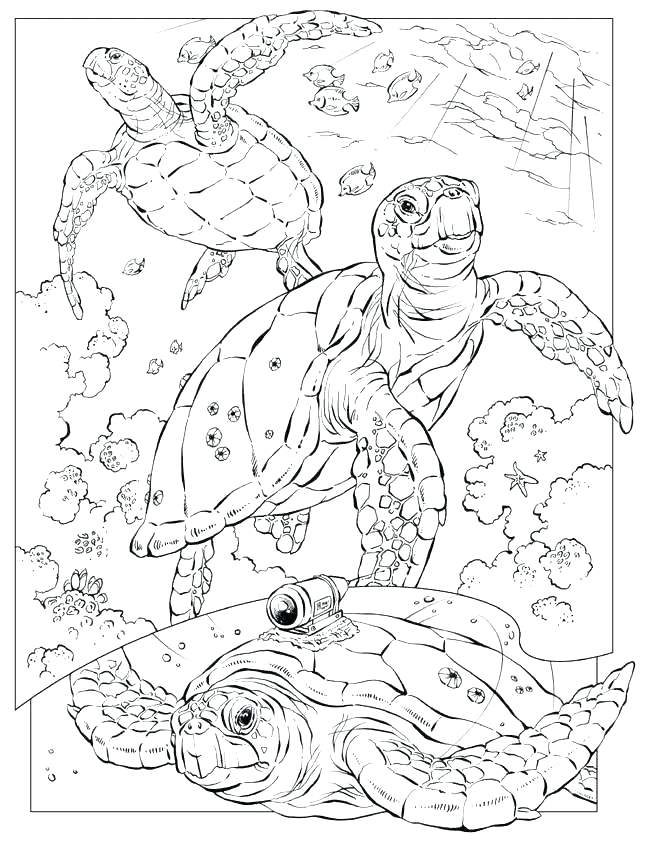 650x841 Free Printable Ocean Coloring Pages For Kids Ocean Animal Coloring